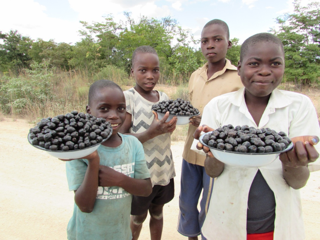 These young entreprenours were captured along Chaka Road in Chirumanzu where they were selling black berries (tsubvu). One plate full is going for 50 cents..JPG